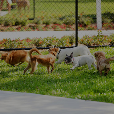 Large Dog Park at Foxridge by Lotus Apartments